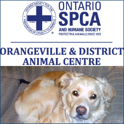 Orangeville and District Animal Shelter